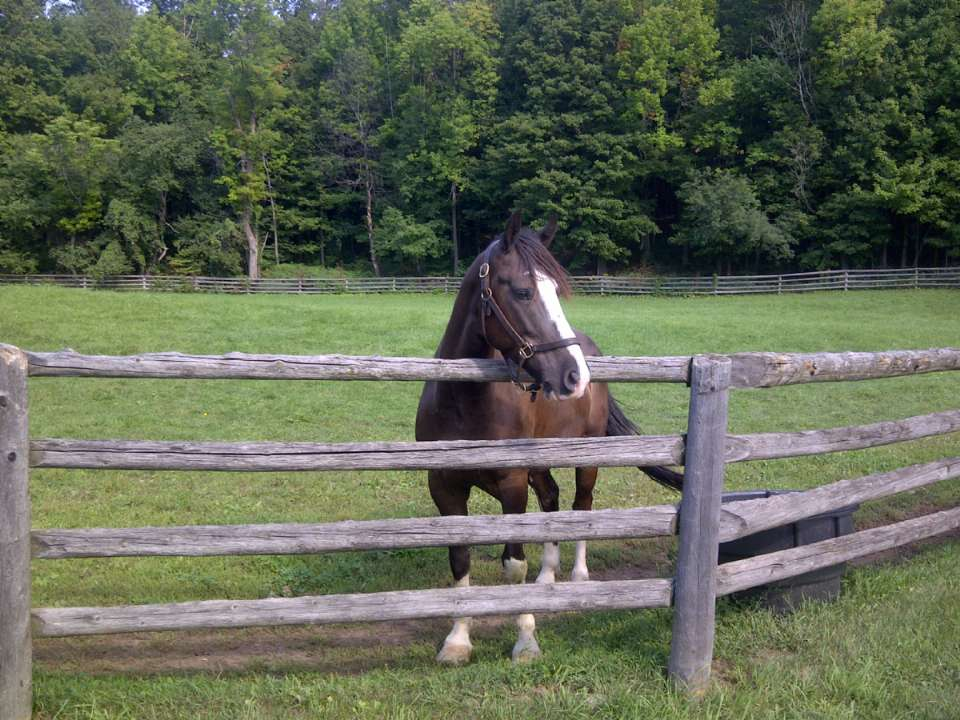 Caring for your Horse and Farm Workshops